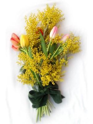 mimosa_tulipani_web.jpg